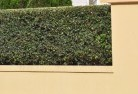 Albury Decorative fencing 30
